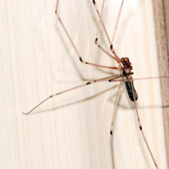 Spiders, Pest Control in Acton, W3. Call Now! 020 8166 9746